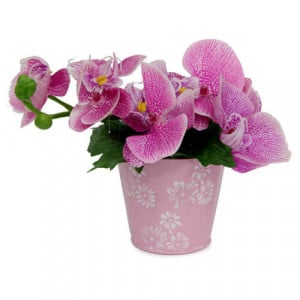 Awesome Flower Arrangement - Online Gifts