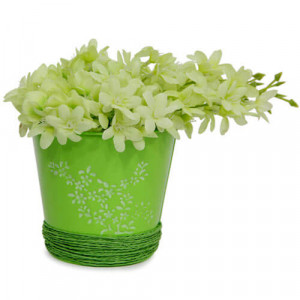 Pretty Flower Arrangement - Online Gifts