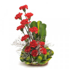 Ruby Red 12 Red Carnations - Flower Basket Arrangements Online