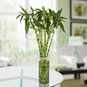 10 Spiral Bamboo Plant - Anniversary Gifts for Grandparents