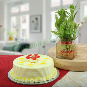 Butterscotch Cake With Bamboo Plant - Online Christmas Gifts Flowers Cakes