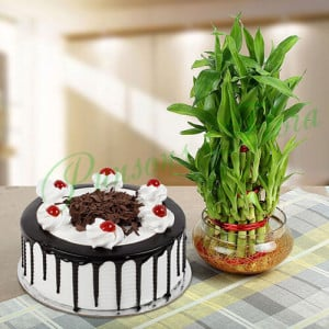 Eggless Blackforest Cake N Three Layer Bamboo - Send Diwali Plants Online