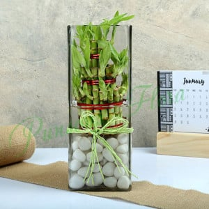 Exquisite Three Layer Bamboo Terrarium - Send Diwali Plants Online