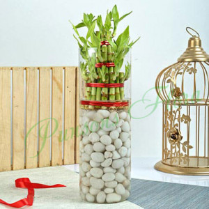 Three Layer Bamboo Decor Terrarium - Send Diwali Plants Online