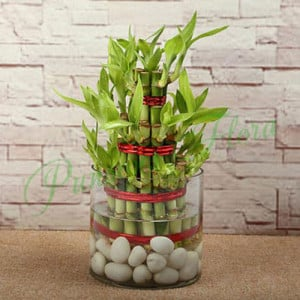 Three Layer Bamboo Luck Terrarium - Glass Vase Arrangements