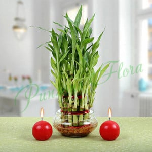 Three Layer Bamboo Plant With Red Candles - Send Diwali Flowers Online