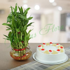 Three Layer Bamboo With Pineapple Cake - Flowers and Cake Online