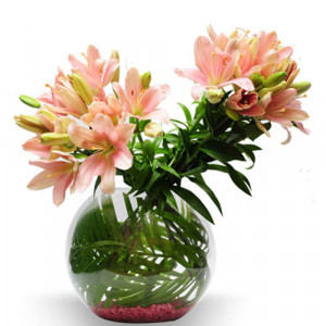Pretty pink India - Same Day Delivery Gifts Online