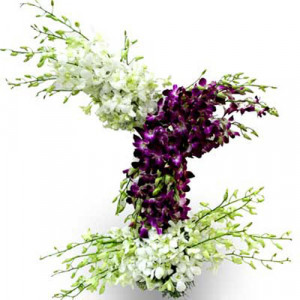 Orchids Exotica India - Send Birthday Gift Hampers Online
