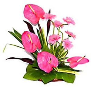 Marvel In Pink - Buy Gerbera Flowers Online