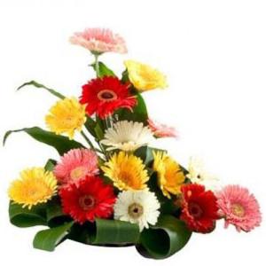 Gorgeous Gerberas - Buy Gerbera Flowers Online