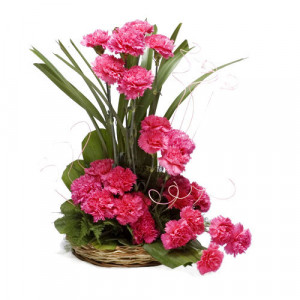 Sunshine 24 Pink Carnations - Marriage Anniversary Gifts Online