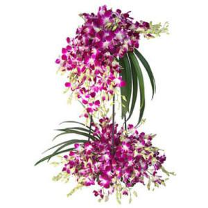 2 Tier Garden - Buy Orchids Online in India