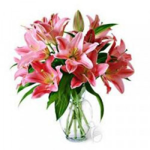 Lily of the valley - Send Lilies Online India