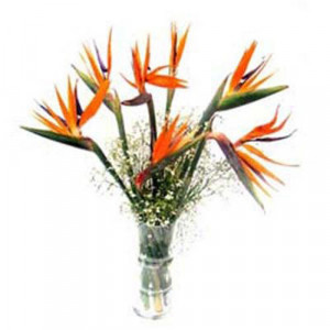 Truly Paradise - Glass Vase Arrangements