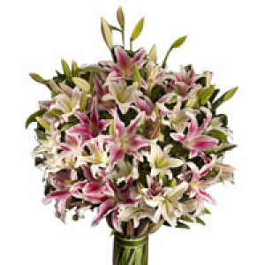 Majestic Affinity - Send Lilies Online India