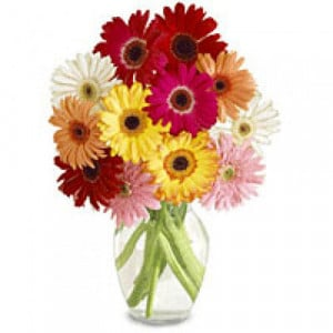 Colorfull Day 12 Mix Gerberas - Glass Vase Arrangements