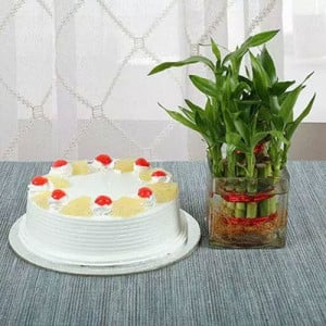 Lucky Bamboo N Pineapple Cake - Online Flower Delivery in Gurgaon