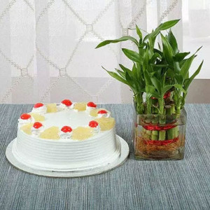 Lucky Bamboo N Pineapple Cake - Flowers and Cake Online