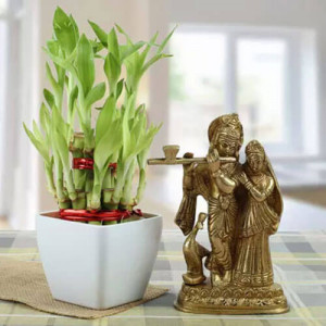 Forever Bond - Indoor Plants Online