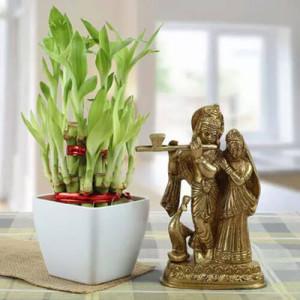 Forever Bond - Send Lucky Bamboo Plants Online
