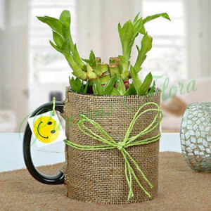 Mug Full of Lucky Bamboo Plant - Send Diwali Plants Online