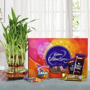 Yummy Chocolates N Three Layer Bamboo Plant Combo - Send Flowers and Chocolates Online