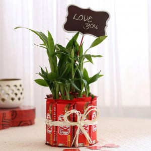 Lucky Bamboo with Kit Kat Chocolates Combo - Send Diwali Plants Online
