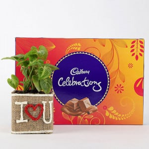 Syngonium Plant In Vase With Cadbury Celebrations - Send Diwali Plants Online