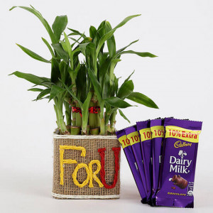 2 Layer Lucky Bamboo In For U Vase With Dairy Milk Silk Chocolates - Send Flowers and Chocolates Online