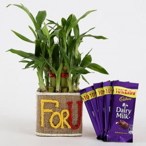 2 Layer Lucky Bamboo In For U Vase With Dairy Milk Silk Chocolates - Send Plants n Chocolates Online