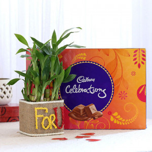 2 Layer Lucky Bamboo In For U Vase With Cadbury Celebrations - Send Flowers and Chocolates Online