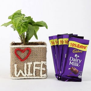 Syngonium Plant & Dairy Milk Chocolates - Send Flowers and Chocolates Online