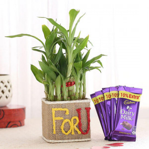 2 Layer Lucky Bamboo In For U Vase With Dairy Milk Chocolates - Send Flowers and Chocolates Online