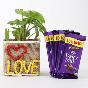 Syngonium Plant With 5 Dairy Milk Chocolates - Gifts for Wife Online