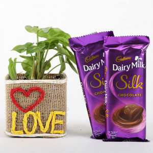 Syngonium Plant With 2 Dairy Milk Silk Chocolates - Send Plants n Chocolates Online