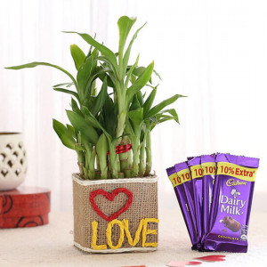 2 Layer Lucky Bamboo In Love Vase With Dairy Milk Chocolates - Send Diwali Plants Online