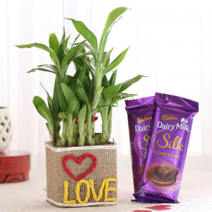 2 Layer Lucky Bamboo In Love Vase With Dairy Milk Silk Chocolates - Send Diwali Plants Online