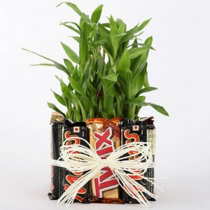 3 Layer Lucky Bamboo In Square Glass Vase With Chocolates - Send Flowers and Chocolates Online