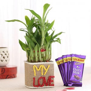 2 Layer Lucky Bamboo In My Love Vase & Dairy Milk Chocolates - Send Flowers and Chocolates Online