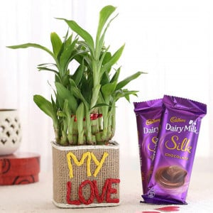 2 Layer Lucky Bamboo In My Love Vase With Dairy Milk Silk Chocolates - Send Diwali Plants Online