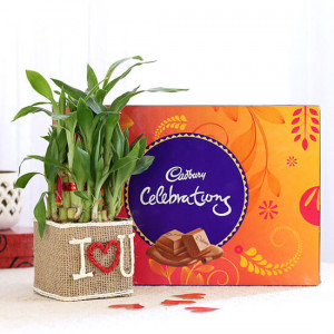 2 Layer Lucky Bamboo In I Love U Vase With Cadbury Celebrations - Send Diwali Plants Online