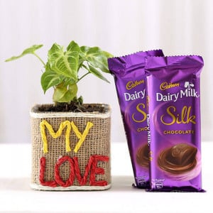 Syngonium Plant With Dairy Milk Silk Chocolates - Send Flowers and Chocolates Online