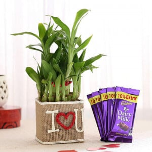 2 Layer Lucky Bamboo In I Love U Vase With Dairy Milk Chocolates - Send Plants n Chocolates Online