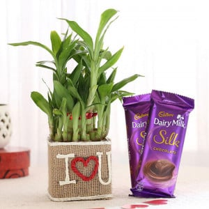2 Layer Lucky Bamboo In I Love U Vase With Dairy Milk Silk Chocolates - Send Diwali Plants Online