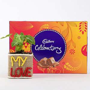 Syngonium Plant With Cadbury Celebrations - Send Flowers and Chocolates Online