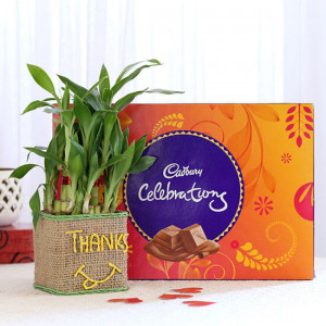 2 Layer Lucky Bamboo In Glass Vase With Cadbury Celebrations - Send Diwali Plants Online