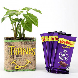 Syngonium Plant In Glass Vase With Dairy Milk Chocolates - Send Plants n Chocolates Online