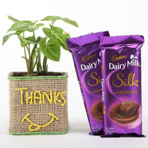 Syngonium Plant In Glass Vase With Dairy Milk Silk Chocolates - Send Diwali Plants Online