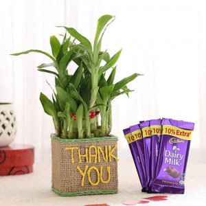 2 Layer Lucky Bamboo In Thank You Vase With Dairy Milk Chocolates - Send Plants n Chocolates Online